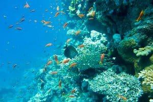 אלמוגים במים