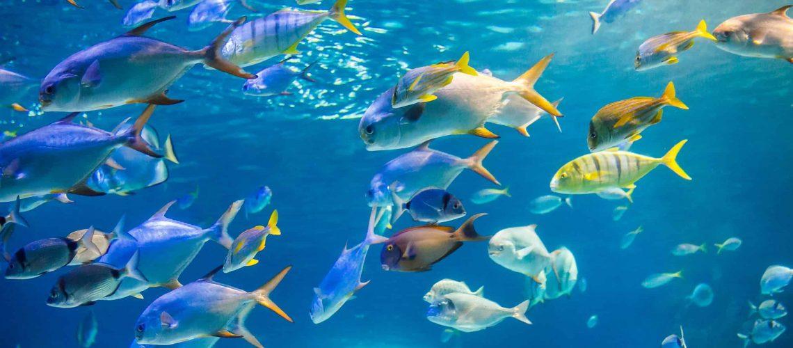 דגים במים